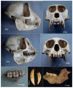 rivirasika-medagedara-kelum-manamendra-archchi-pgiar-zooarchaeology-sri-lanka-archaeology.lk-1-250x300